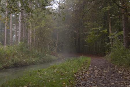 pflanzen: Waldweg im Nebel