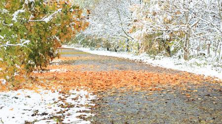 pflanzen: snowy forest trail Stock Photo