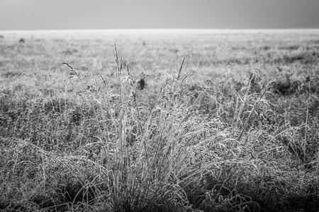 pflanzen: der erste Frost bedeckt die Wiesen