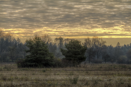 pflanzen: Morgenstimmung �ber einer Heidelandschaft in K�nigsbrunn bei Augsburg