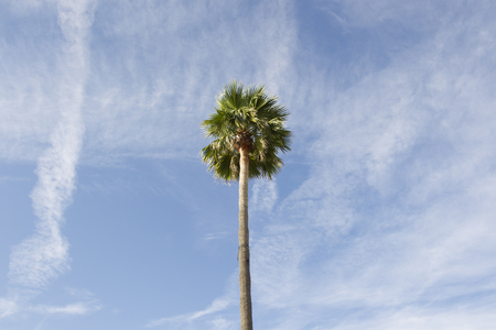 Top of a palm tree in front of a summery blue sky with small clouds Standard-Bild