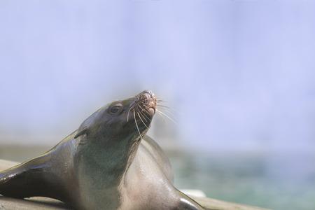 a seal lies on a stone Standard-Bild