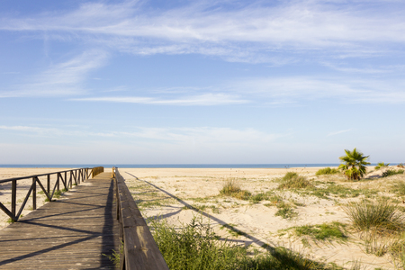 Wooden planks walkway leads between palm trees on a beach near the sea with blue sky