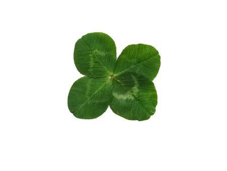 quarterfoil: Detail of a quarterfoil leaf blade of clover Stock Photo