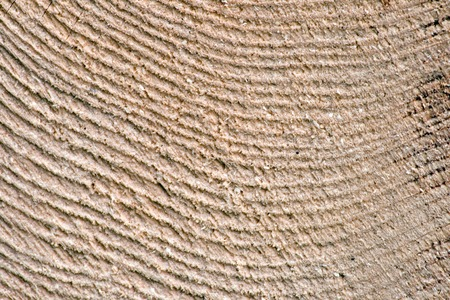 Detail of the texture of the wood of a spruce Stock Photo - 1379773