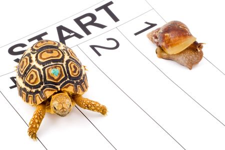 a tortoise competing with a snail in a runnig race Stock Photo