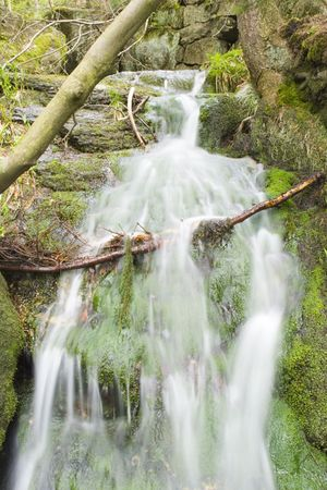 nant: a little stream in the mountain forest