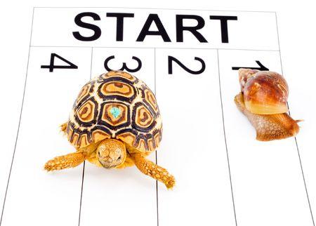 caracol: una tortuga compitiendo con un caracol en una carrera de funcionamiento