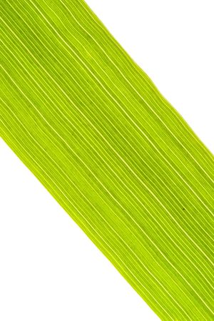 nervation: detail of the venation of a grass blade