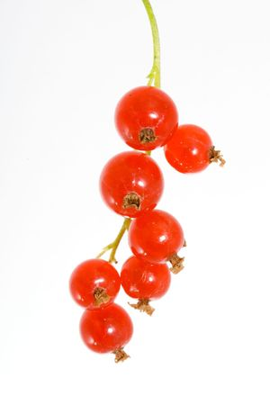 ribes: a bunch of berries of red currant - Ribes rubrum