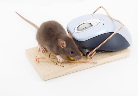 trickery: a mouse used his computer sibling to get to the cheese