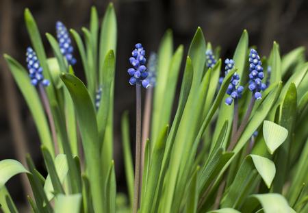 small purple flower: Flower. Amazing blue flower large green leaves. Small purple flowers.
