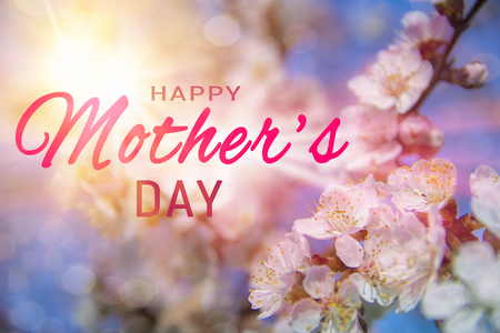 Happy Mothers day greeting card. Spring Cherry Blossom trees selective focus Pink Sakura flowers on blue sky background