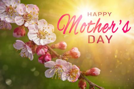 Happy Mothers day greeting card. Gentle spring background. Beautiful flowering Japanese cherry - Sakura