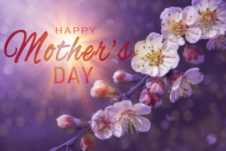 Happy Mothers day greeting card. Beautiful floral spring abstract background of nature. Branches of blossoming apricot macro with soft focus on gentle sky background.
