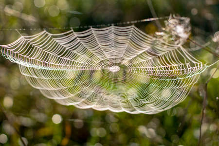 Beautiful spider web close-up on the background of nature. Selective frocus