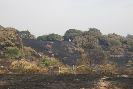 Santa Rosa - Shiloh Regional Park after Fire