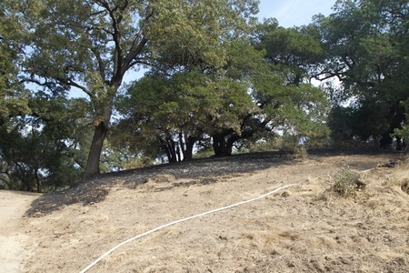 Santa Rosa - Shiloh Regional Park after Fire, night from Sunday October 8 to Monday October 9, was devastated forest fire, Shiloh Regional Park was zone of active fire. Monday Oct 16 2017.