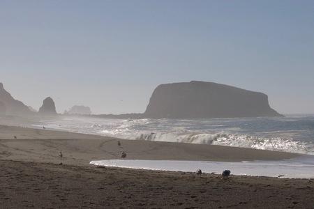Birds Goat Rock Beach, California - Pelican, Oystercatcher, Seagull, Seal. Stok Fotoğraf