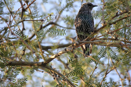 Desert birds tend to be much more abundant where the vegetation is lusher and thus offers more insects, fruit and seeds as food.   Where the Arizona cities of Phoenix, Scottsdale, Tucson and Mesa adjoin desert washes or foothills these birds can be common as well.