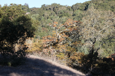 Shiloh Ranch Regional Park in southeast Windsor features a rugged landscape in the foothills of the Mayacamas Mountains. The park includes oak woodlands, forests of mixed evergreens.