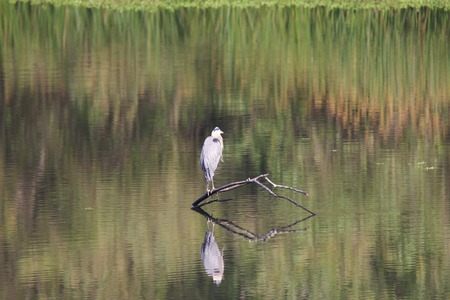 Birds. Riverfront Regional Park - is just minutes west of downtown Windsor and surrounded by classic Wine Country scenery. The park features two beautiful lakes for fishing, kayaking, canoeing.