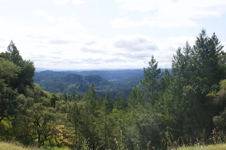 Armstrong Redwoods State Natural Reserve, California,  United States - to preserve 805 acres (326 ha) of coast redwoods (Sequoia sempervirens). The reserve is located in Sonoma County, Guerneville. Snail.