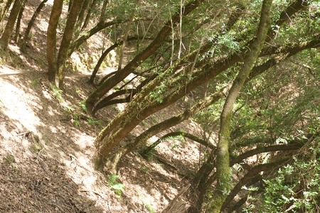 Scenery of Armstrong Redwoods State Natural Reserve, California, United States