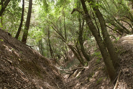 Armstrong Redwoods State Natural Reserve, California,  United States