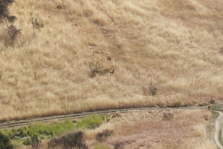 Shiloh Ranch Regional California deer.  The park includes oak woodlands, forests of mixed evergreens, ridges with sweeping views of the Santa Rosa Plain, canyons, rolling hills, a shaded creek, and a pond.