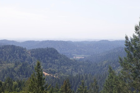 Scenery of Armstrong Redwoods State Natural Reserve, California, United States.  The reserve is located in Sonoma County, Guerneville.