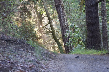 Shiloh Ranch Regional California  The park includes oak woodlands, forests of mixed evergreens, ridges with sweeping views of the Santa Rosa Plain, canyons, rolling hills, a shaded creek, and a pond. 写真素材