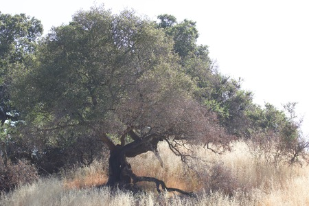 Shiloh Ranch Regional California.  The park includes oak woodlands, forests of mixed evergreens, ridges with sweeping views of the Santa Rosa Plain, canyons, rolling hills, a shaded creek, and a pond.