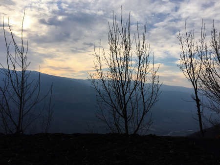 view: Trees Without Leaves In Mountain View
