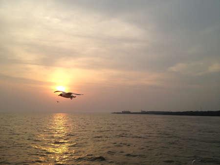 samutprakarn: Flying Seagull On Beautiful Sunset Background At Bangpoo, Samutprakarn Province, Thailand Stock Photo