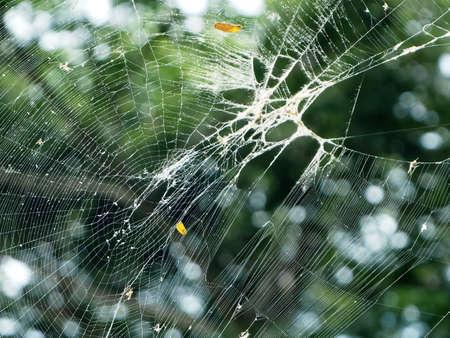 net: Spiderweb Closeup Background