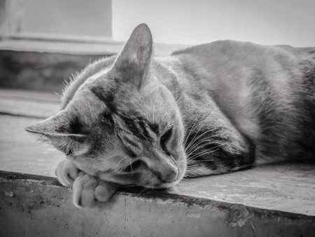 closeup: Closeup Portrait Of Lonely Sleepy Cat
