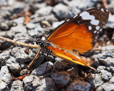 up: Close Up Of Butterfly On Ground Stock Photo