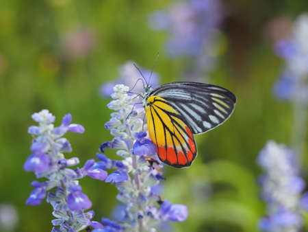 colorful: Butterfly On A Flower