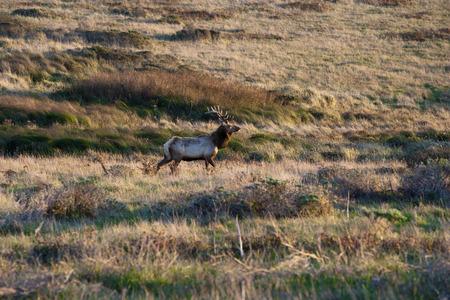 backwoods: deer standing alone in the prairie