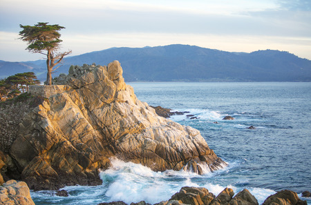 lone pine: the lone pine on 17 mile drive in Monterey, California Stock Photo