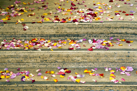 scattered: colorful petals scattered on stairs Stock Photo