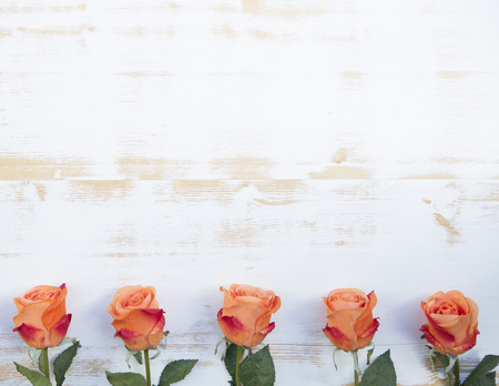 beautiful orange roses  lined up in a row on a white vintage wooden background