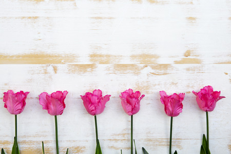 beautiful pink tulips lined up in a row on a white vintage wooden background Stock Photo