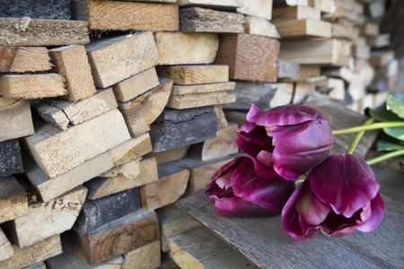 three purple tulips next to a stack of wood photo