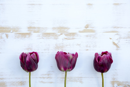 three purple tulips on white rustic wooden background Stock Photo