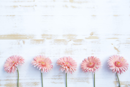 beautiful pink gerbera lined up in a row on a white vintage wooden background