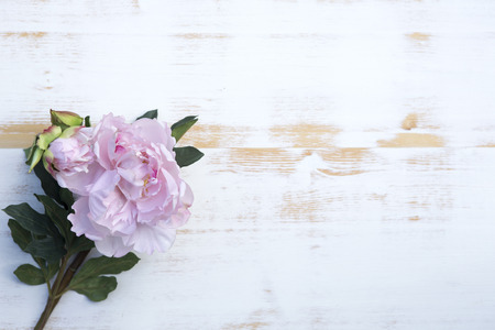 beautiful pink peonies on a white vintage wooden background Stock Photo