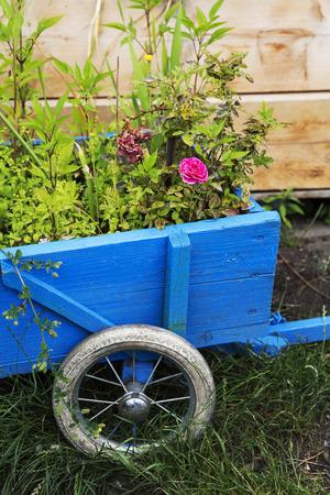 青い木製の手押し車の花 写真素材