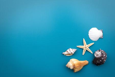 seashell: seashells in one corner on blue background Stock Photo